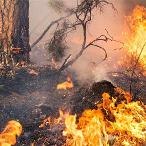 bushfire burning