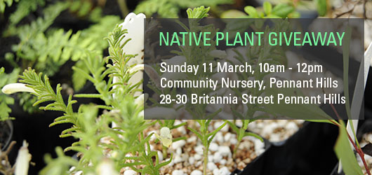 Native Plant Giveaway March 2018