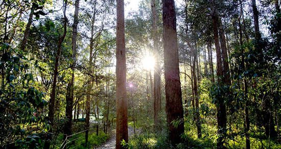 bushlands