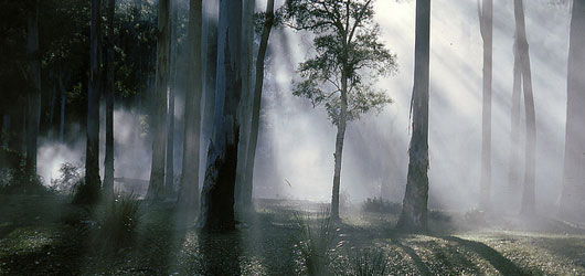 Indigenous trees Thumbnail