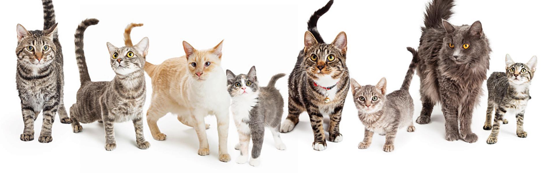 Cats-banner-1920x600px.jpg