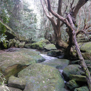 Hunt the hairy geebung bushwalk_photo Jessica Shiel