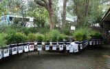 Hornsby Shire Council Community Nursery