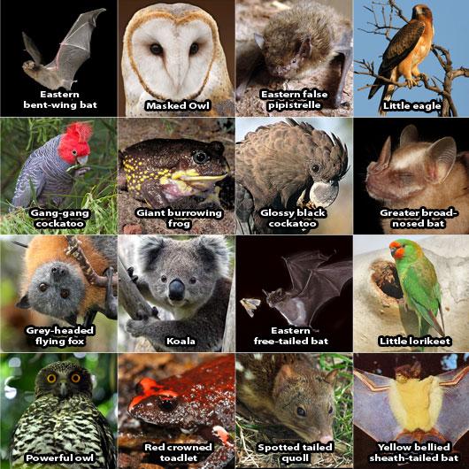 Identified species
