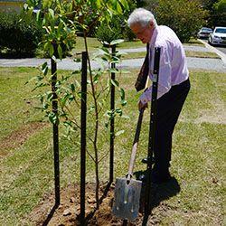 Mayor Ruddock planting tree