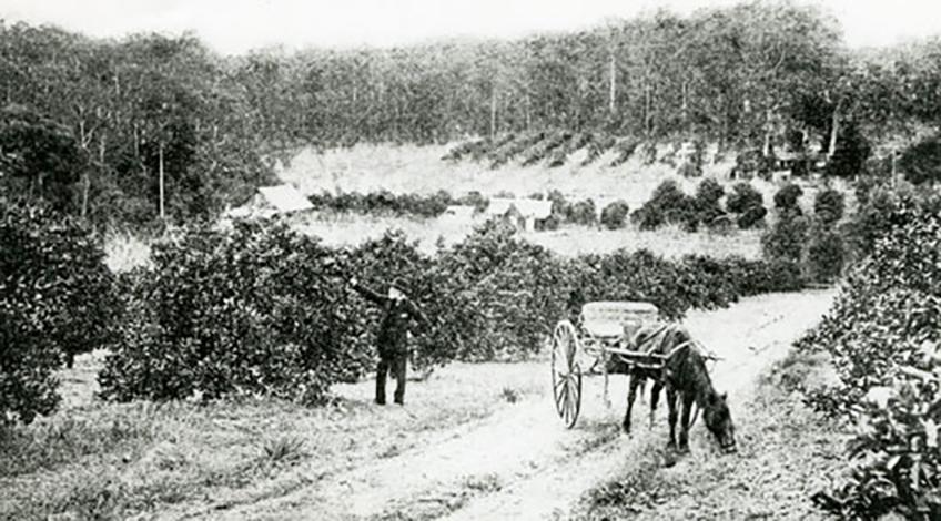 herrings orchard beecroft