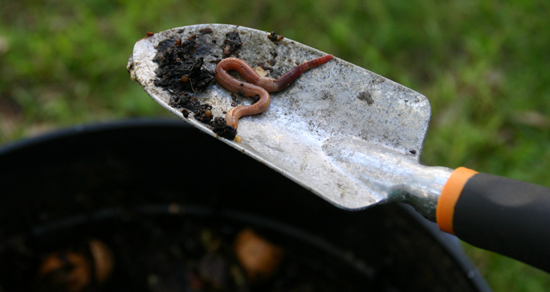Compost and Worm Farming Thumbnail