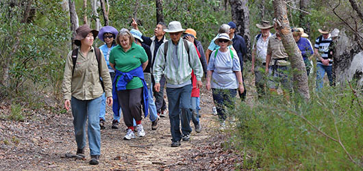 Guided Bushwalk