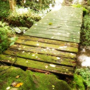 Three streams bushwalk_photo Jemma Williams