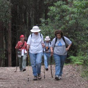 bushwalkers on the Blue Gum track
