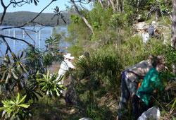 Volunteers at Spectacle Island