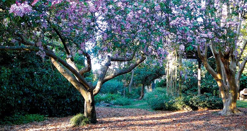 Lilian fraser Gardens