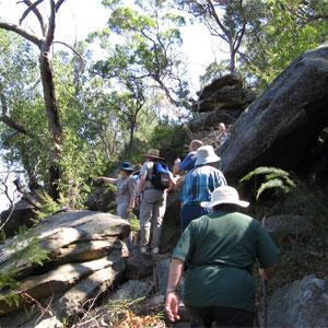 Lorna Pass & Scout Creek bushwalk