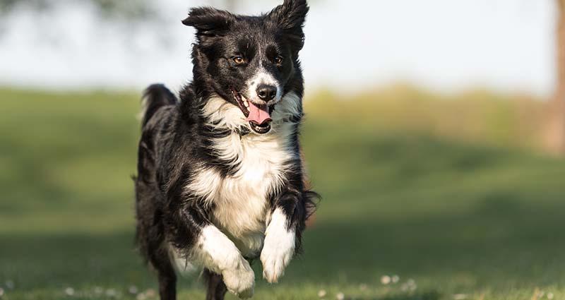 dog off leash