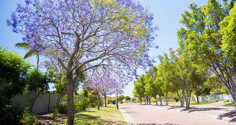 public-trees